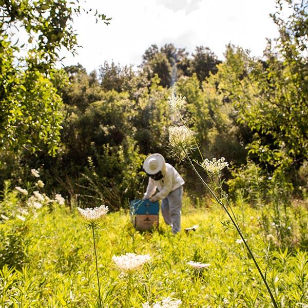 L'apiculture, un métier vital pour l'agriculture à préserver