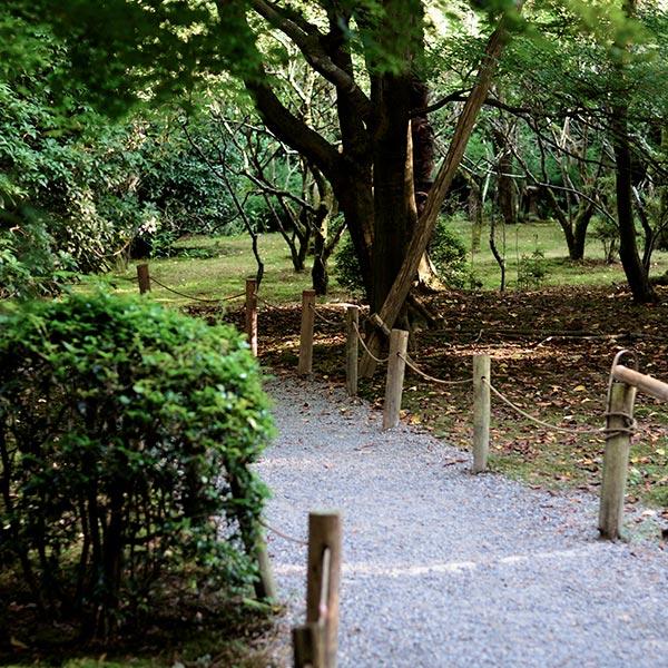 Allée piétonne durable : ombre des arbres et revêtement perméable