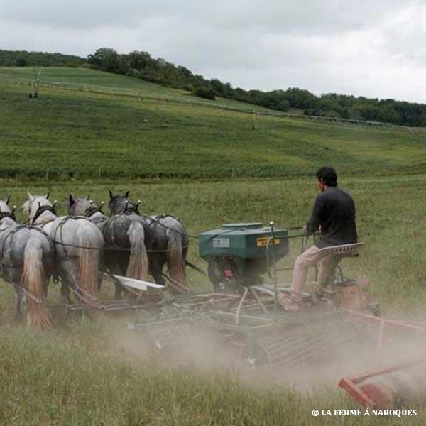 Quand les semis sous couverts offrent de meilleurs rendements que l'irrigation