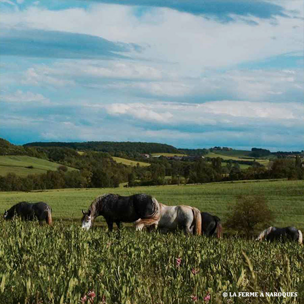 consultant-agroecologie-formation-9