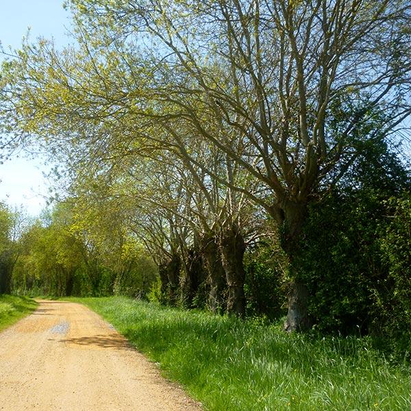 consultant amenagement paysager durable