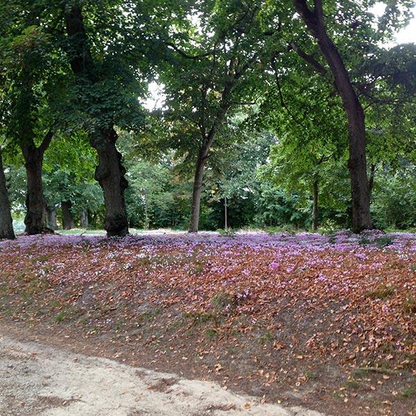 Tapis de fleurs en sous-bois : la nature s'exprime