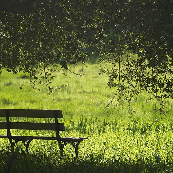 Opter plus pour une prairie qu'une pelouse, c'est préserver la biodiversité !